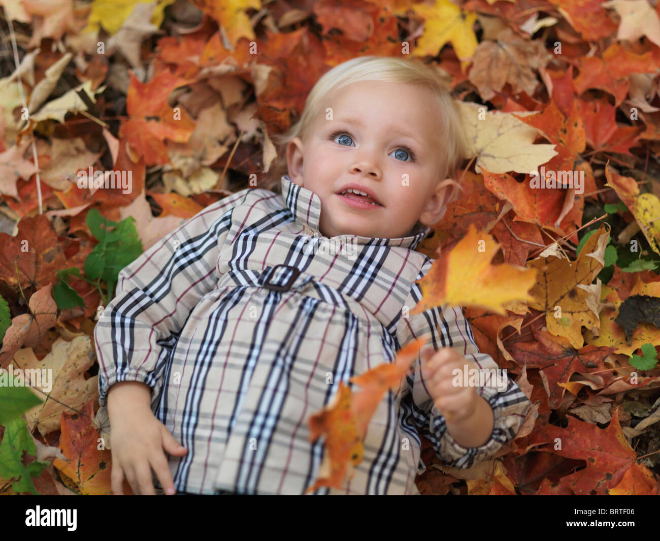 Two year old girl lying on fallen tree leaves in autumn nature - Stock Image
