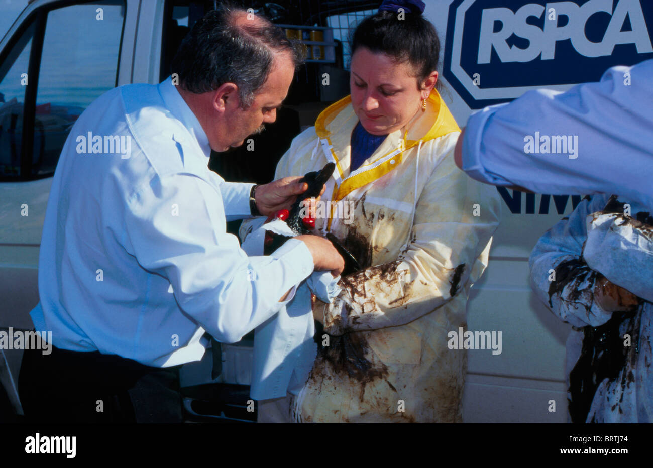 RSPCA staff dealing with oiled seabird following the Sea Empress oil Tanker going afround. Pembrokeshire. - Stock Image