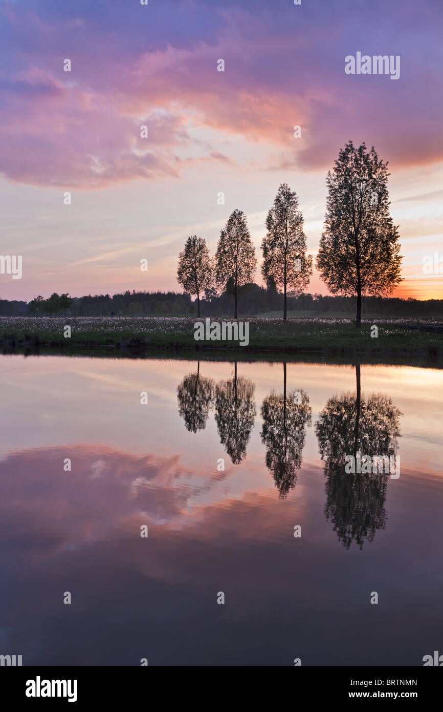 Leafless tree near lake on sunset background sky - Stock Image