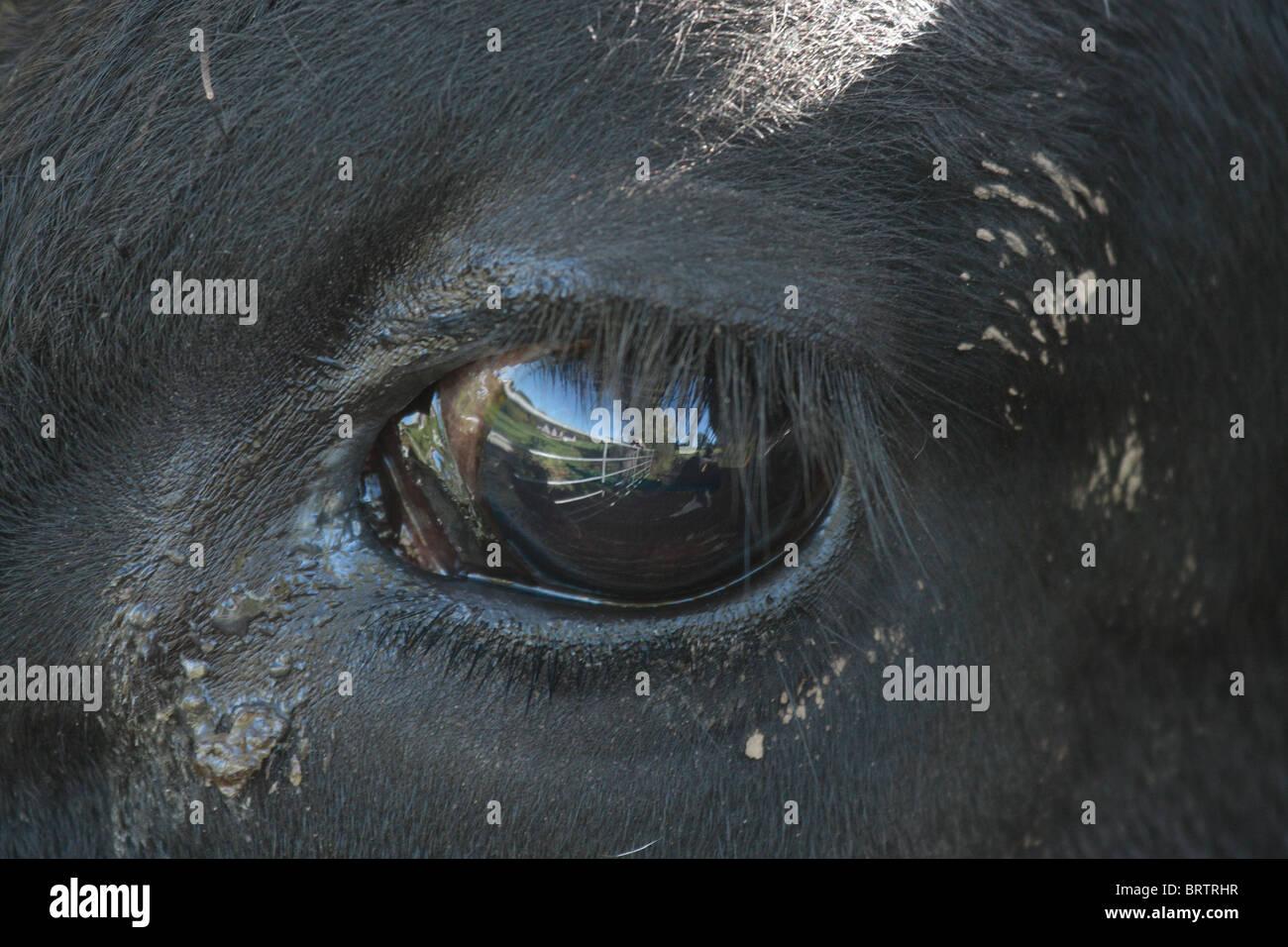 Mammalian Eye - Stock Image