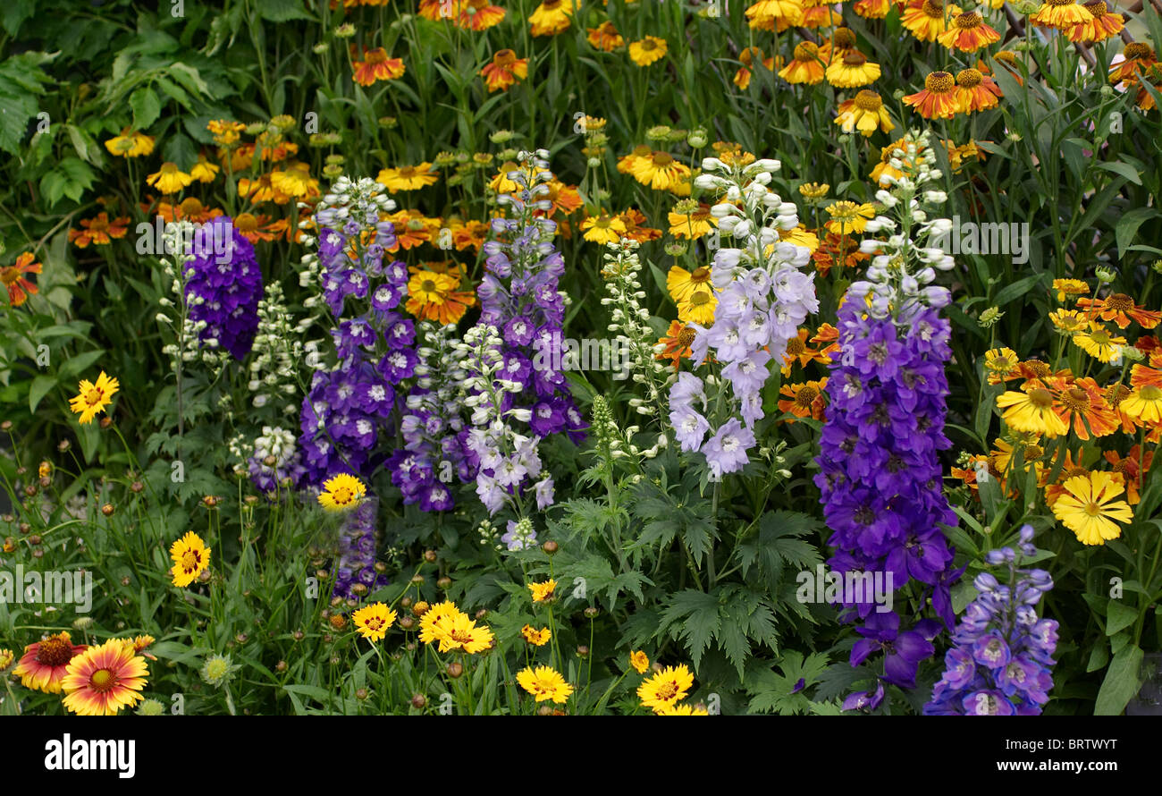 Colourful flower border in an English country garden - Stock Image