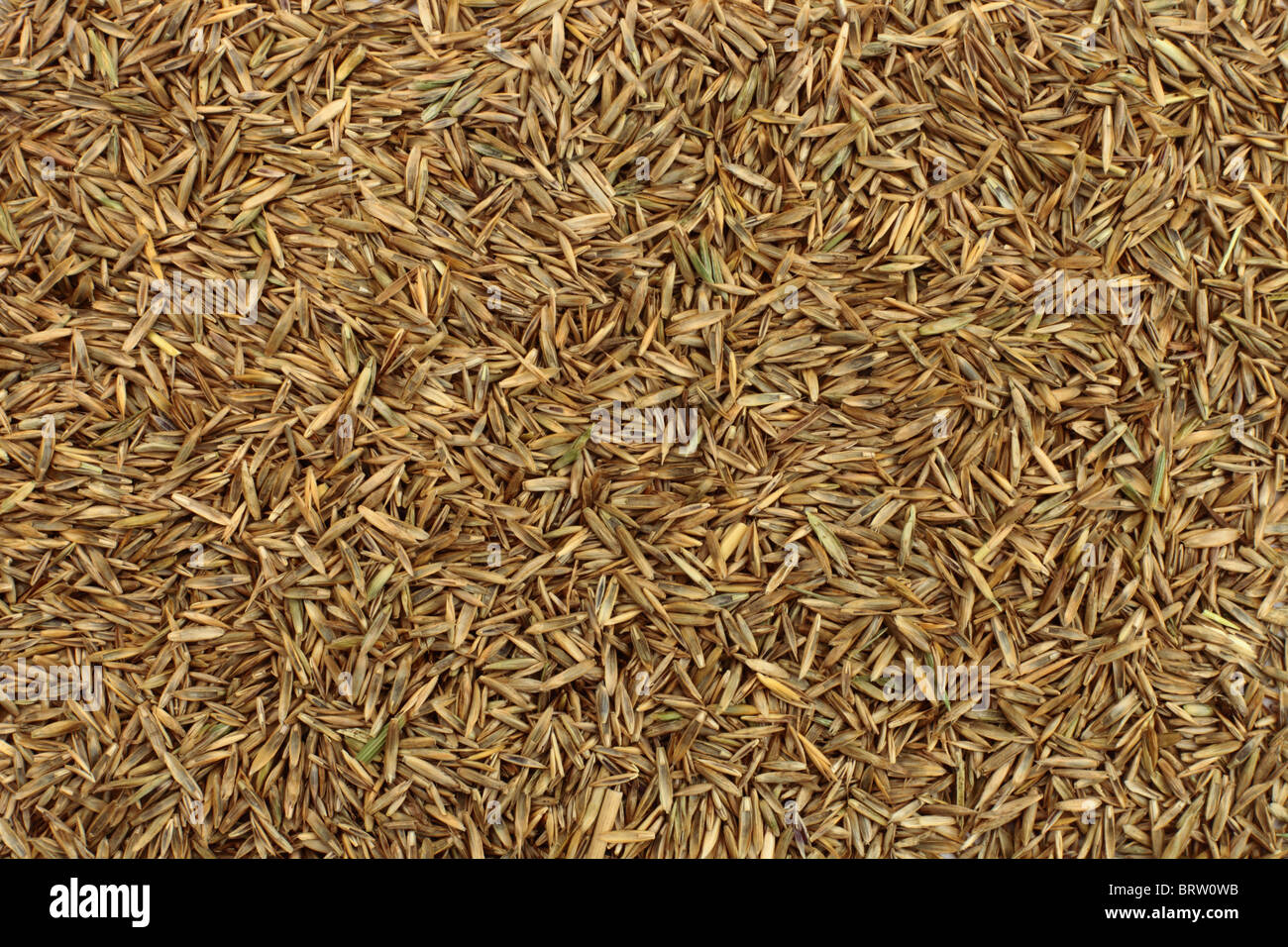 Grass seed background - Stock Image