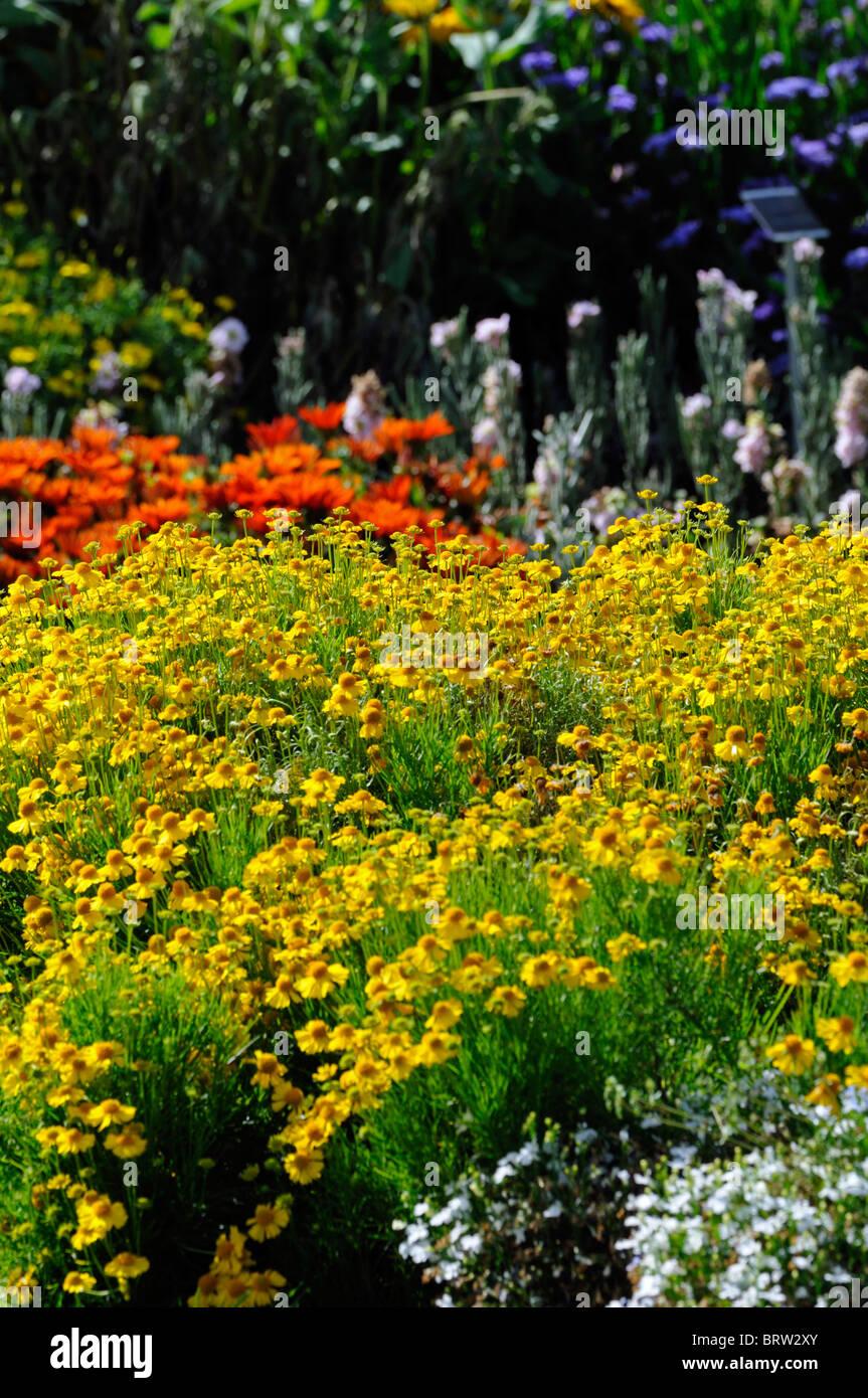 Herbaceous perennial garden border mixed plants flowers blooms stock herbaceous perennial garden border mixed plants flowers blooms blossoms colourful colorful color colour explosion summer mightylinksfo