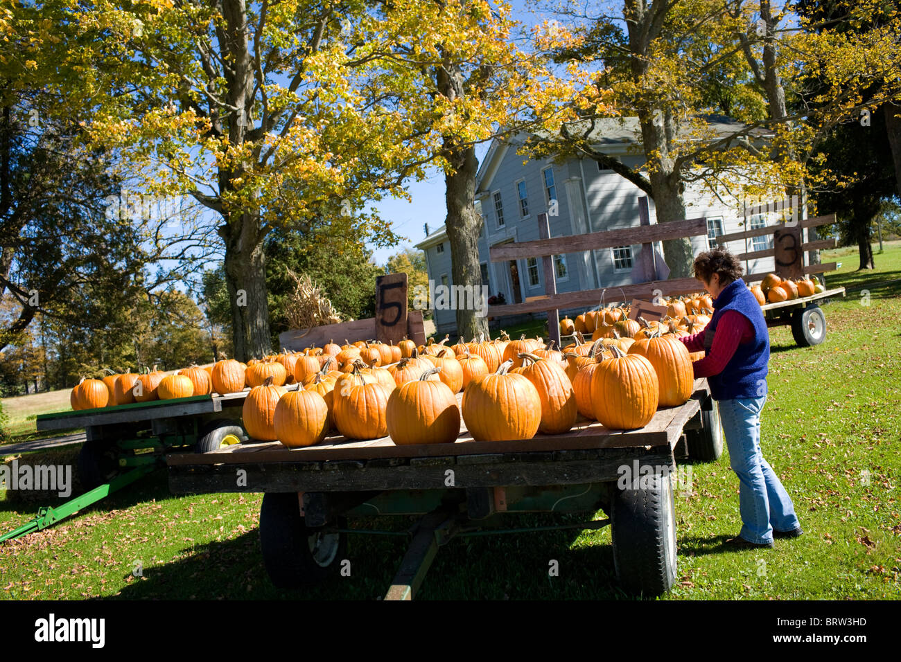 Woman selecting pumpkins for sale at a farm in Mohawk Valley of New York State - Stock Image