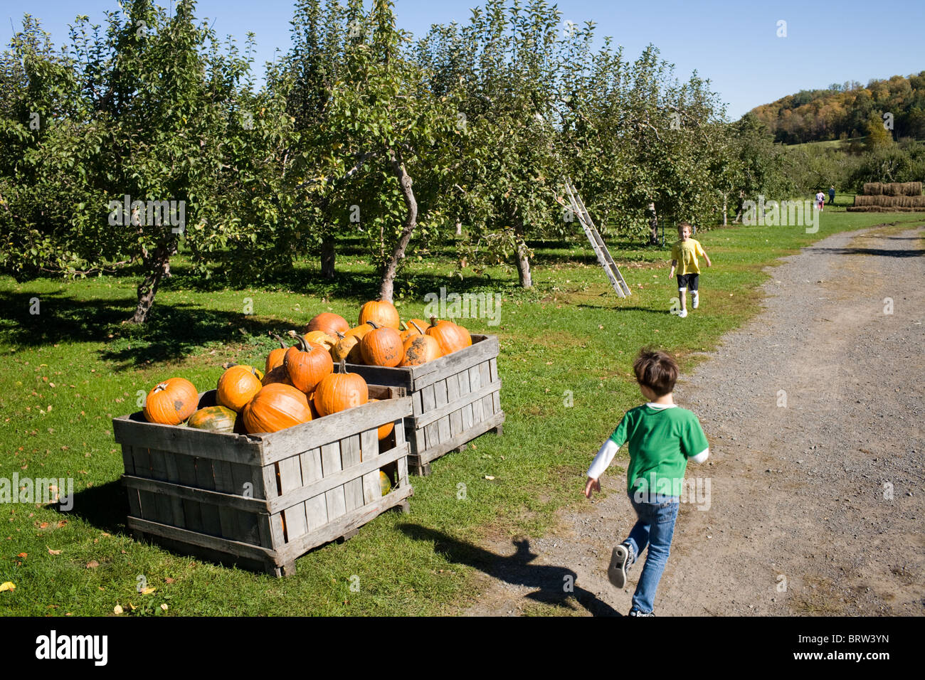 Boy runs by boxes of pumpkins for sale at an orchard in Adirondacks, New York State - Stock Image