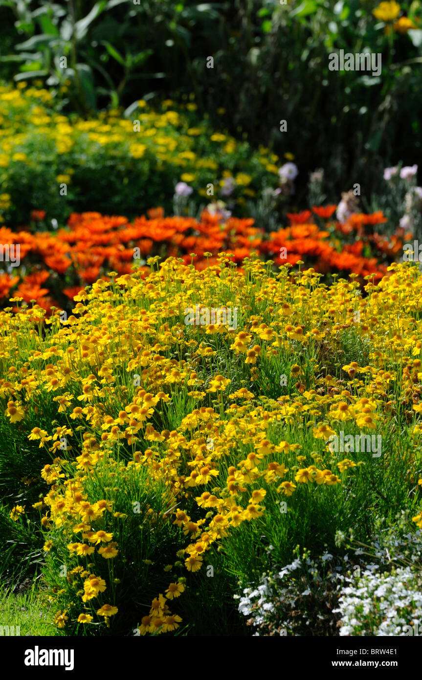 Herbaceous Perennial Garden Border Mixed Plants Flowers Blooms Stock