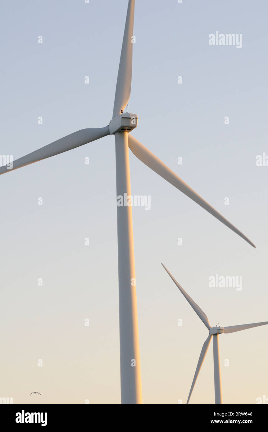 Wind Turbines at dawn with small bird (gull) in flight - Stock Image