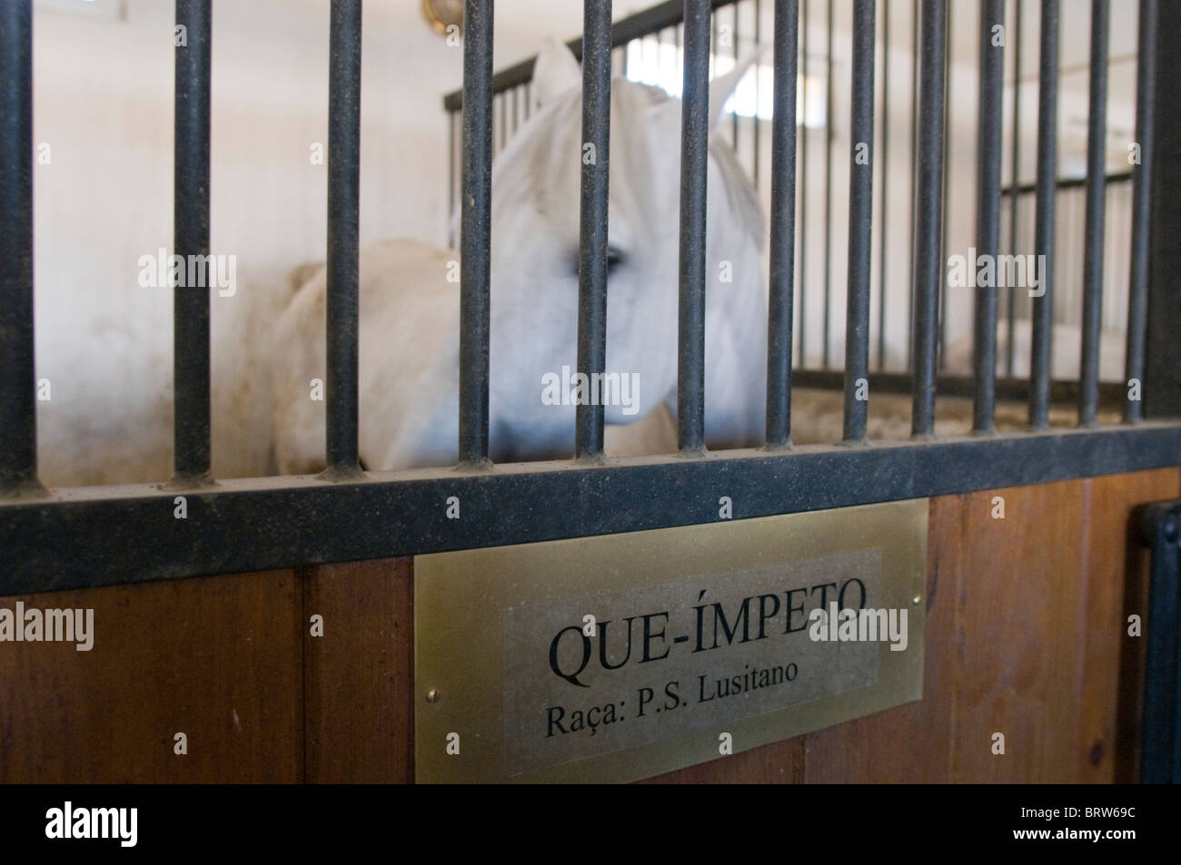 Coudelaria de Alter do Chao, the most famous studfarm in Portugal. Most horses are Lusitanos - Stock Image