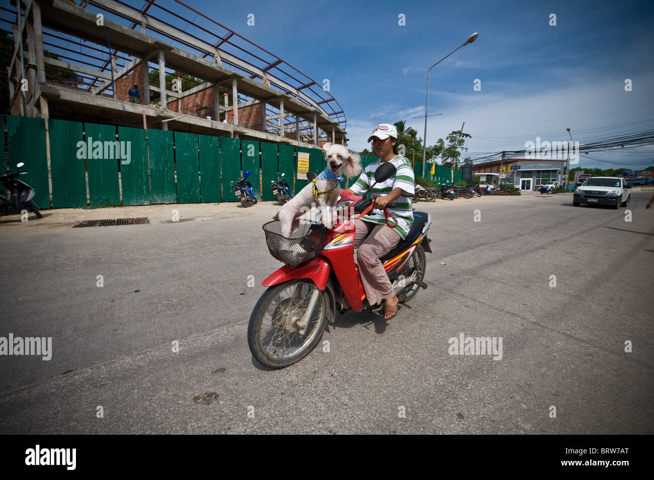 Woman on a red moped, carries her pet dog in the in the front shopping basket. - Stock Image