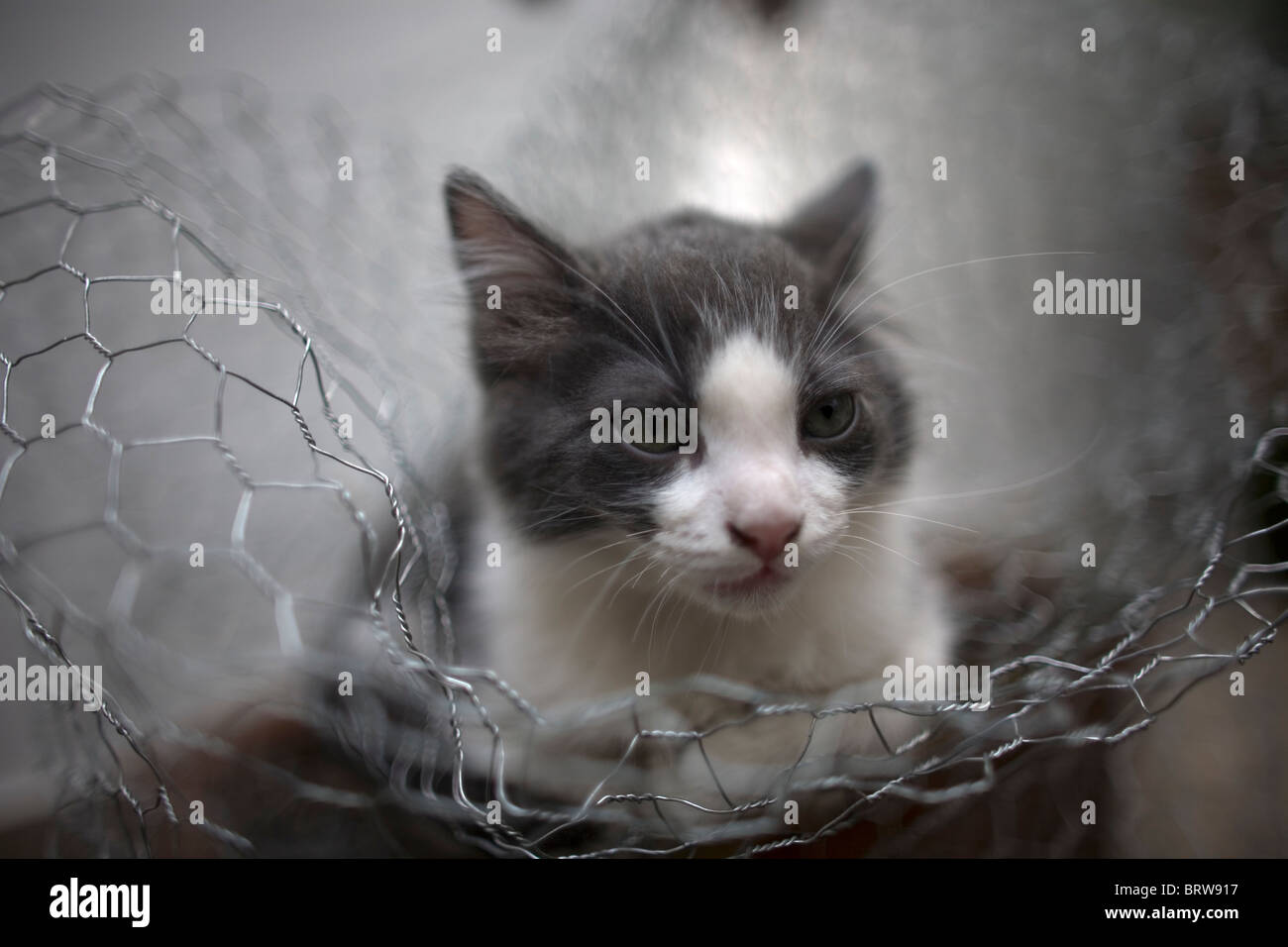 Adorable Baby Kittens Outdoors In Stock Photos & Adorable Baby ...