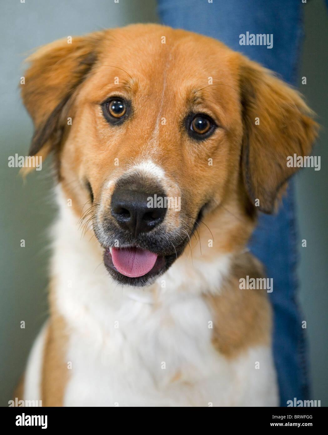 Portrait of a friendly dog, man's best friend - Stock Image