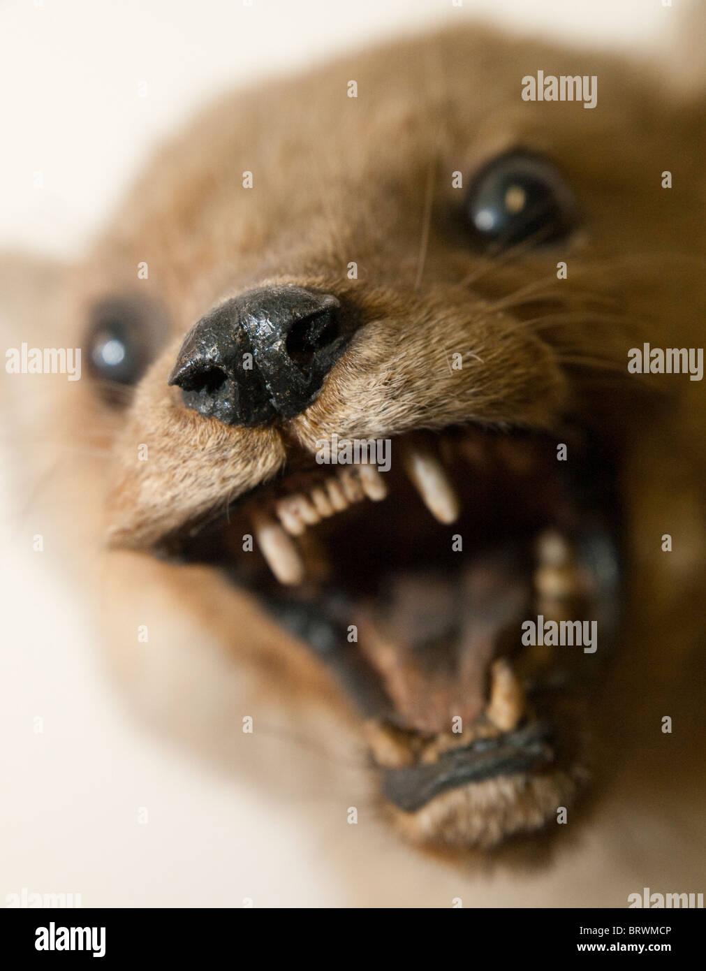 a stuffed animal taxidermy stock photo 31912294 alamy