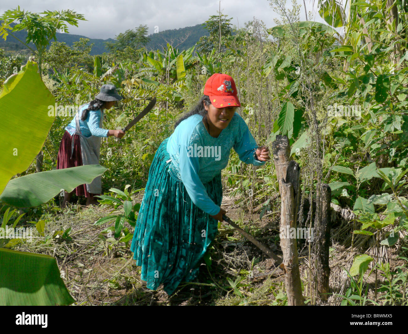 BOLIVIA ECOTOPS projects in Alto Beni. Women cultivating land at Communidad Los Palmeros. photograph by Sean Sprague - Stock Image