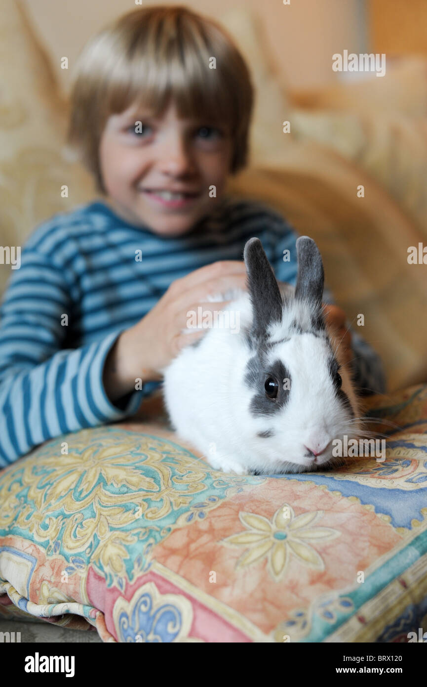 A white and grey house rabbit sitting on a cushion on the lap of a boy smiling in the background - Stock Image