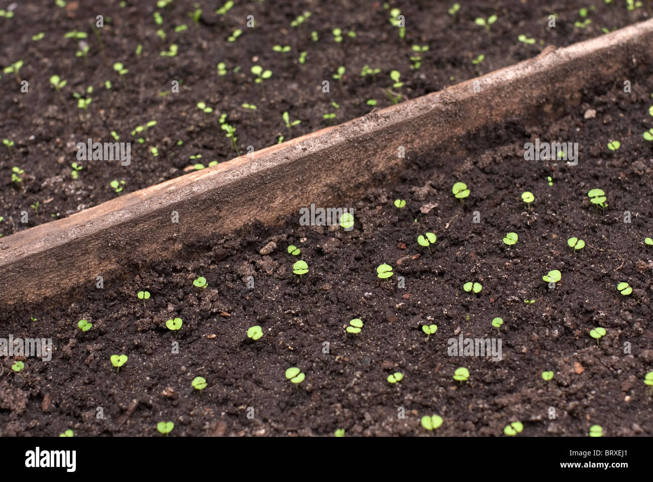 Seedlings on patch separated by plank - Stock Image
