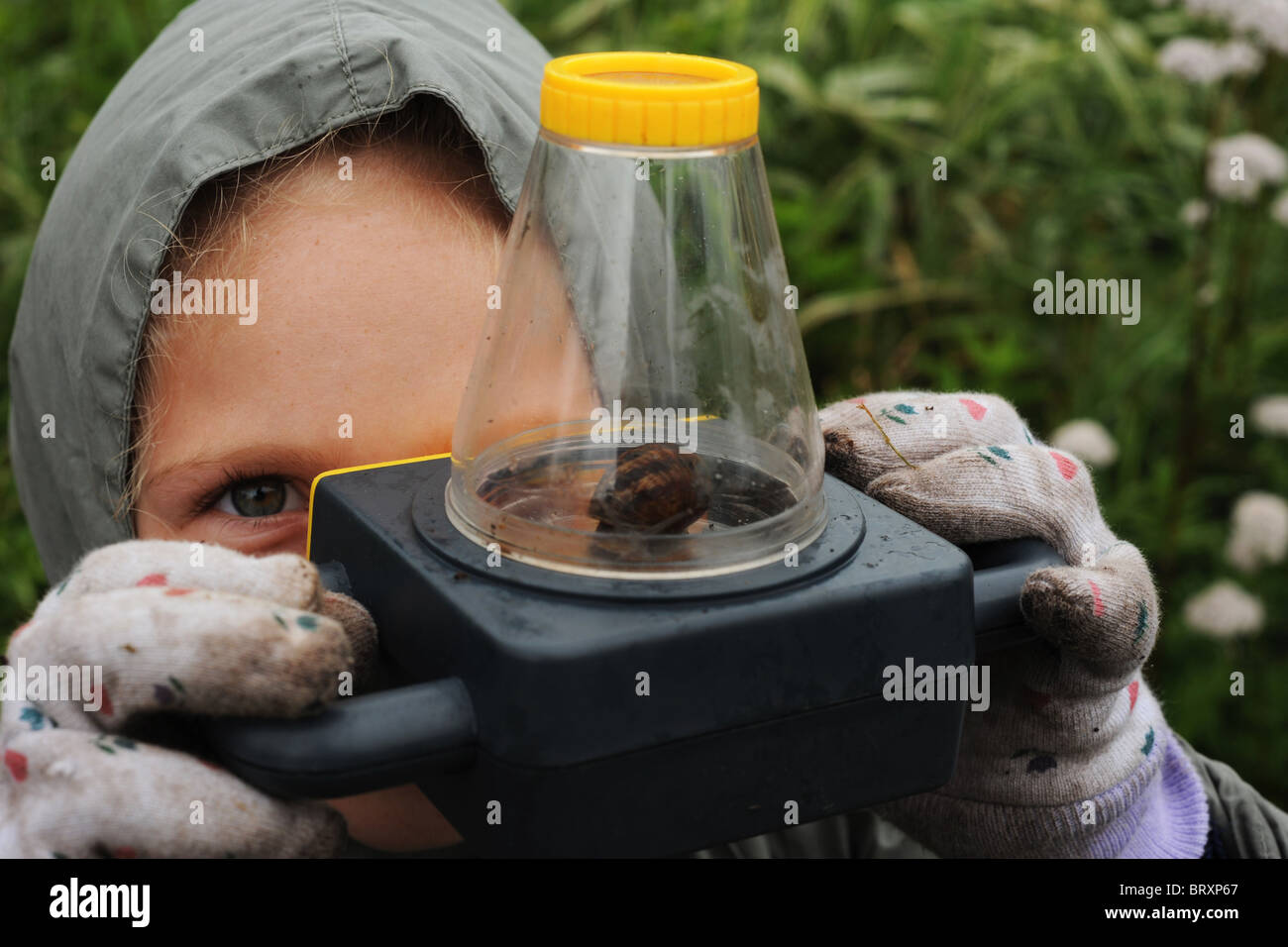 A girl studies a snail close up through a microscope during a visit to local allotments, Bradford - Stock Image