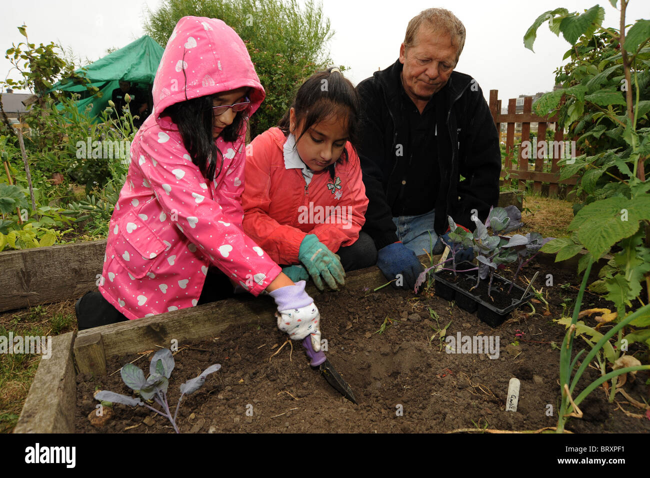 children visit a local inner city allotment to learn about gardening and the environment, Bradford UK - Stock Image