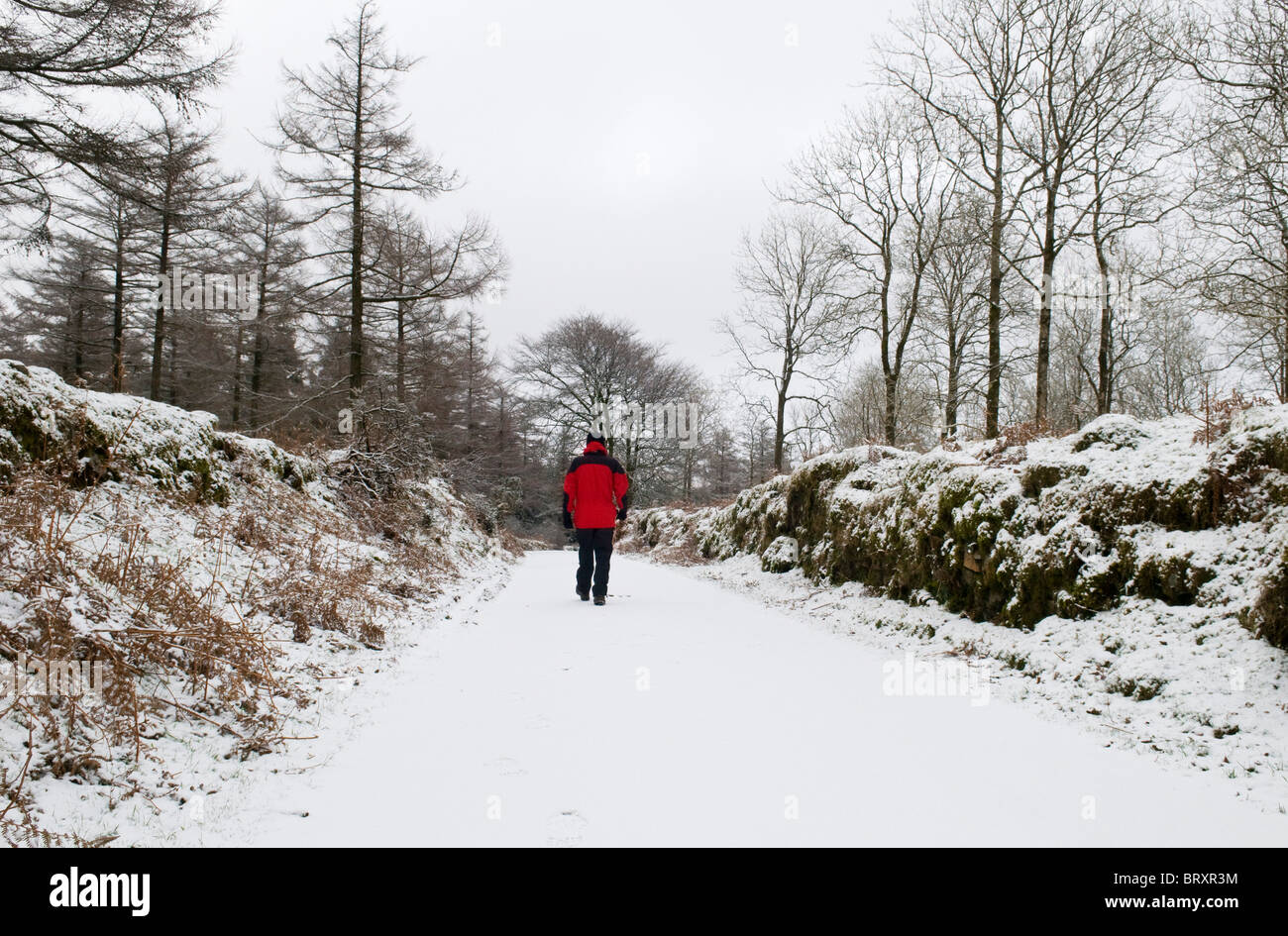 Walker in red winter jacket walking down a snowy lane, Dartmoor, Devon UK - Stock Image