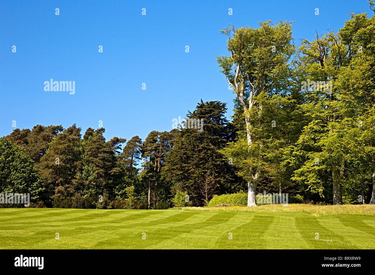 A beautiful striped lawn with trees in the background - Stock Image