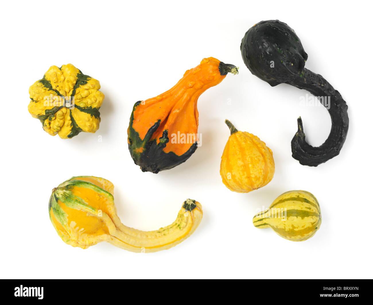 Colorful gourds isolated on white background - Stock Image