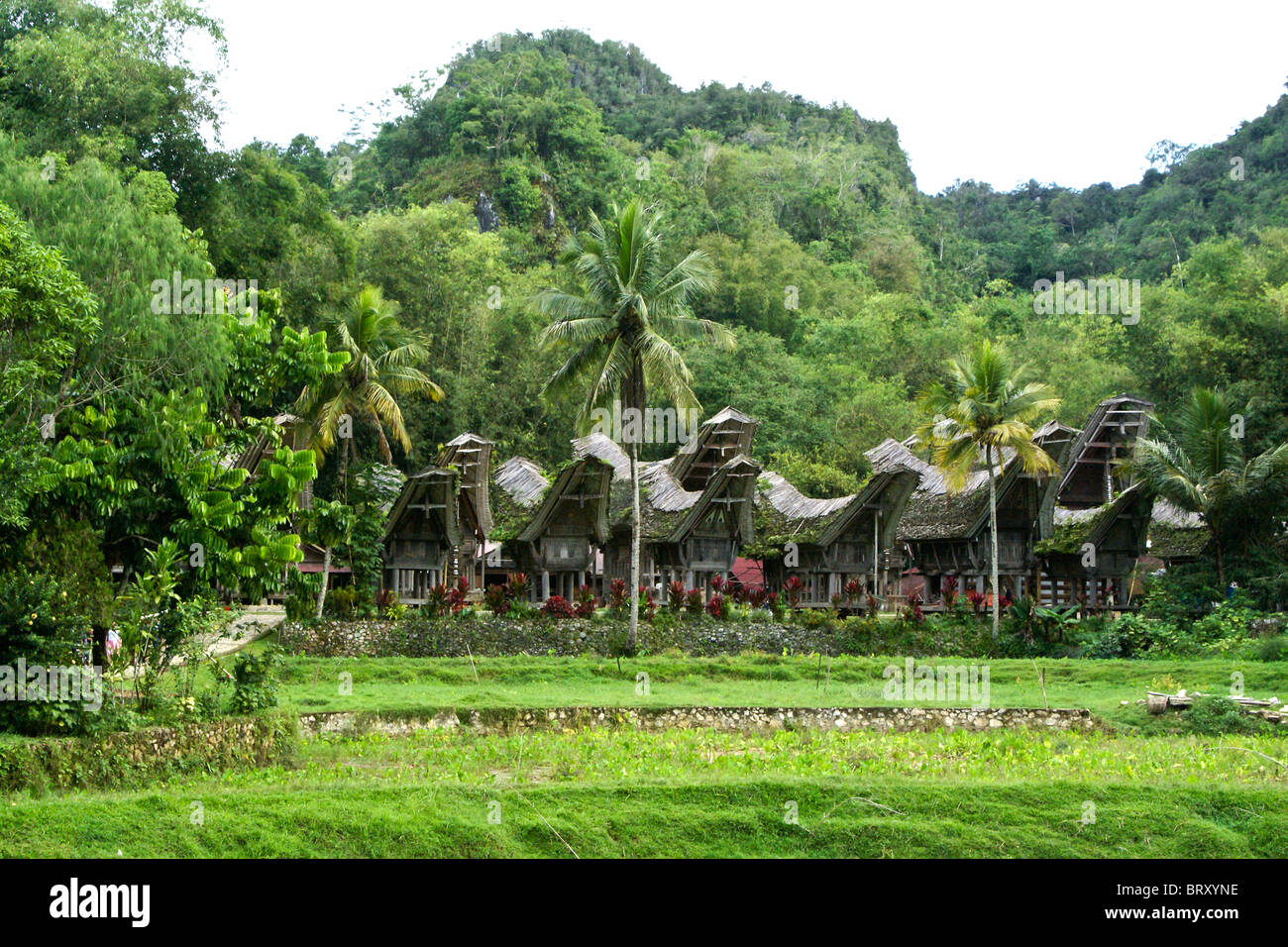 Kete Kesu traditional village, Tana Toraja, South Sulawesi, Indonesia - Stock Image