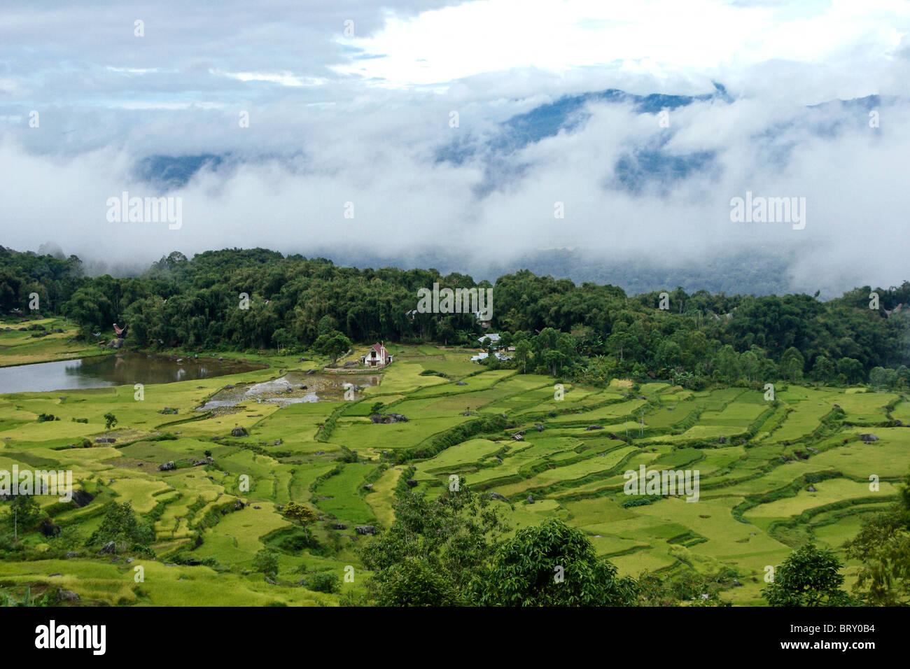 Rice terraces at Batutumonga, Tana Toraja, South Sulawesi, Indonesia - Stock Image