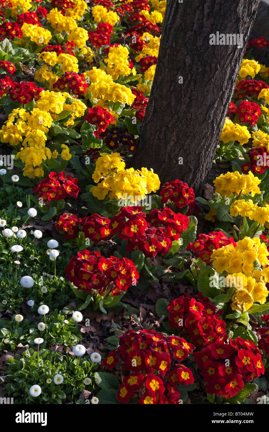 Display Of Early Spring Flowers Including Pansies In A Public Park