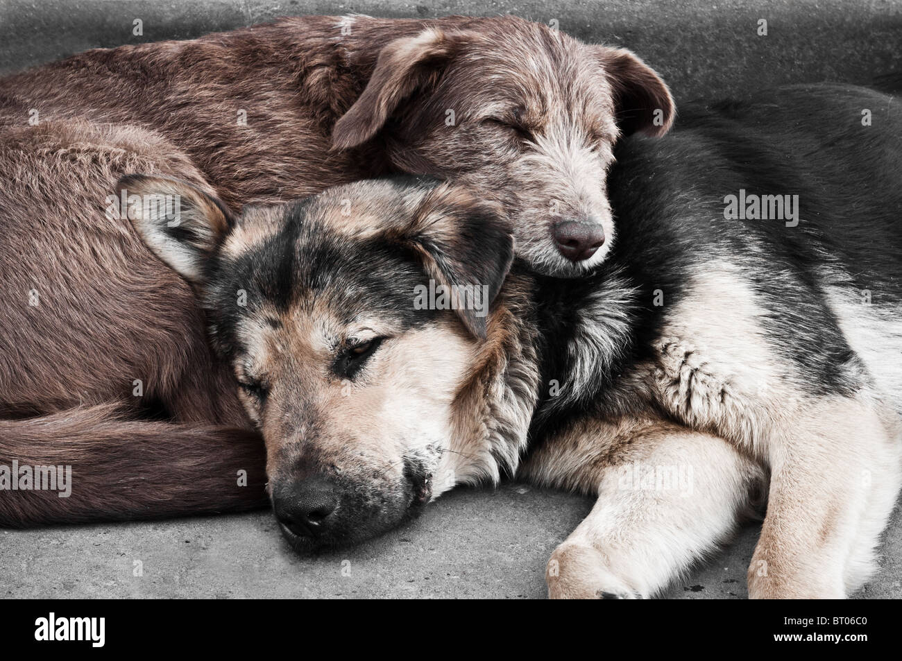 Two dogs on the street - Stock Image