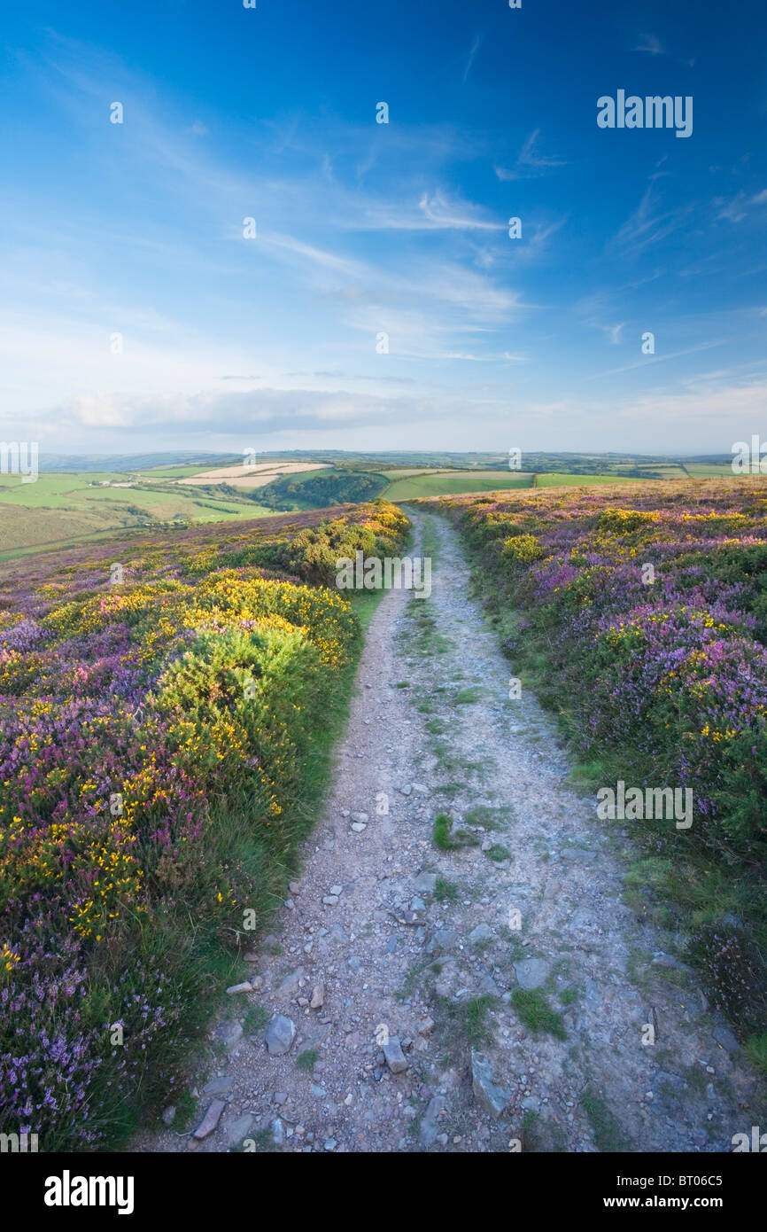 The South West Coast Path on Great Hangman. Exmoor National Park. Devon. England. UK. - Stock Image