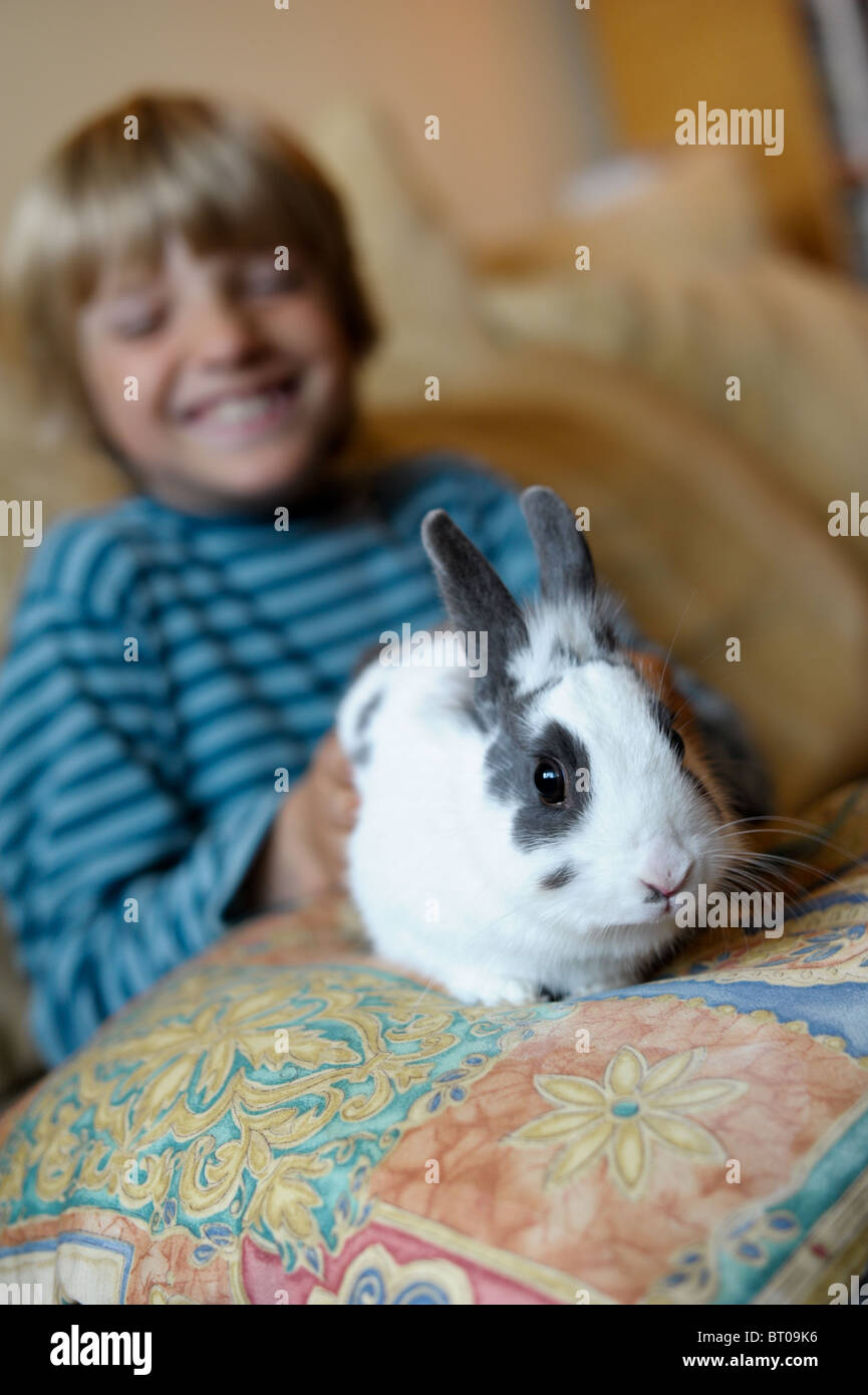 A white and grey house rabbit sitting on a cushion on the lap of a boy giggling in the background - Stock Image