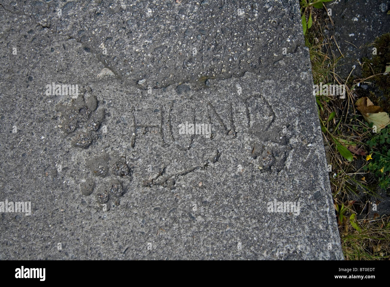 The German word hund for dog with paw prints in a concreteslab - Stock Image