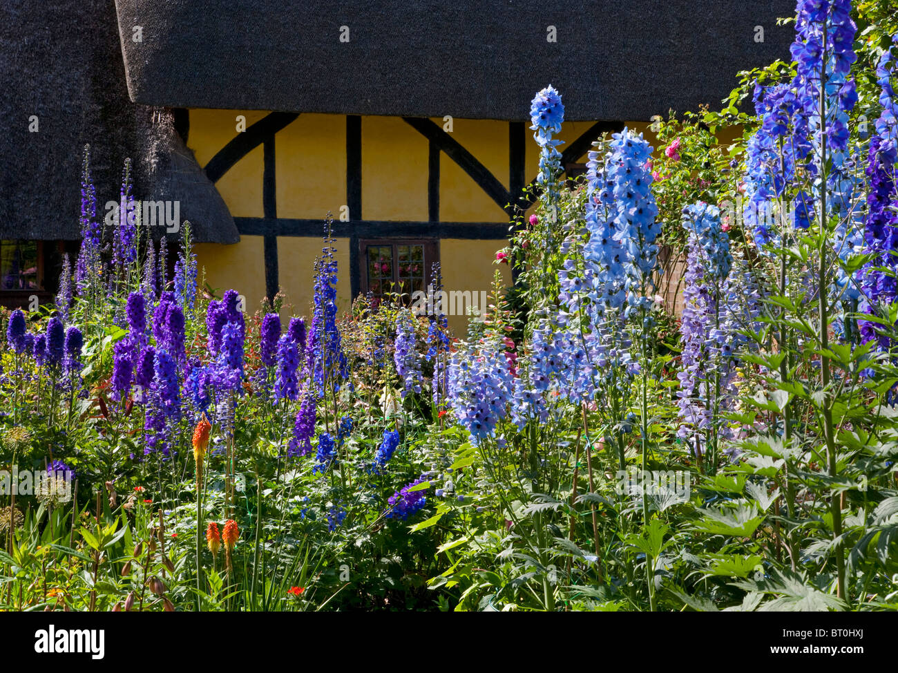 Herbaceous summer cottage garden boarder with old English half timber house in background - Stock Image