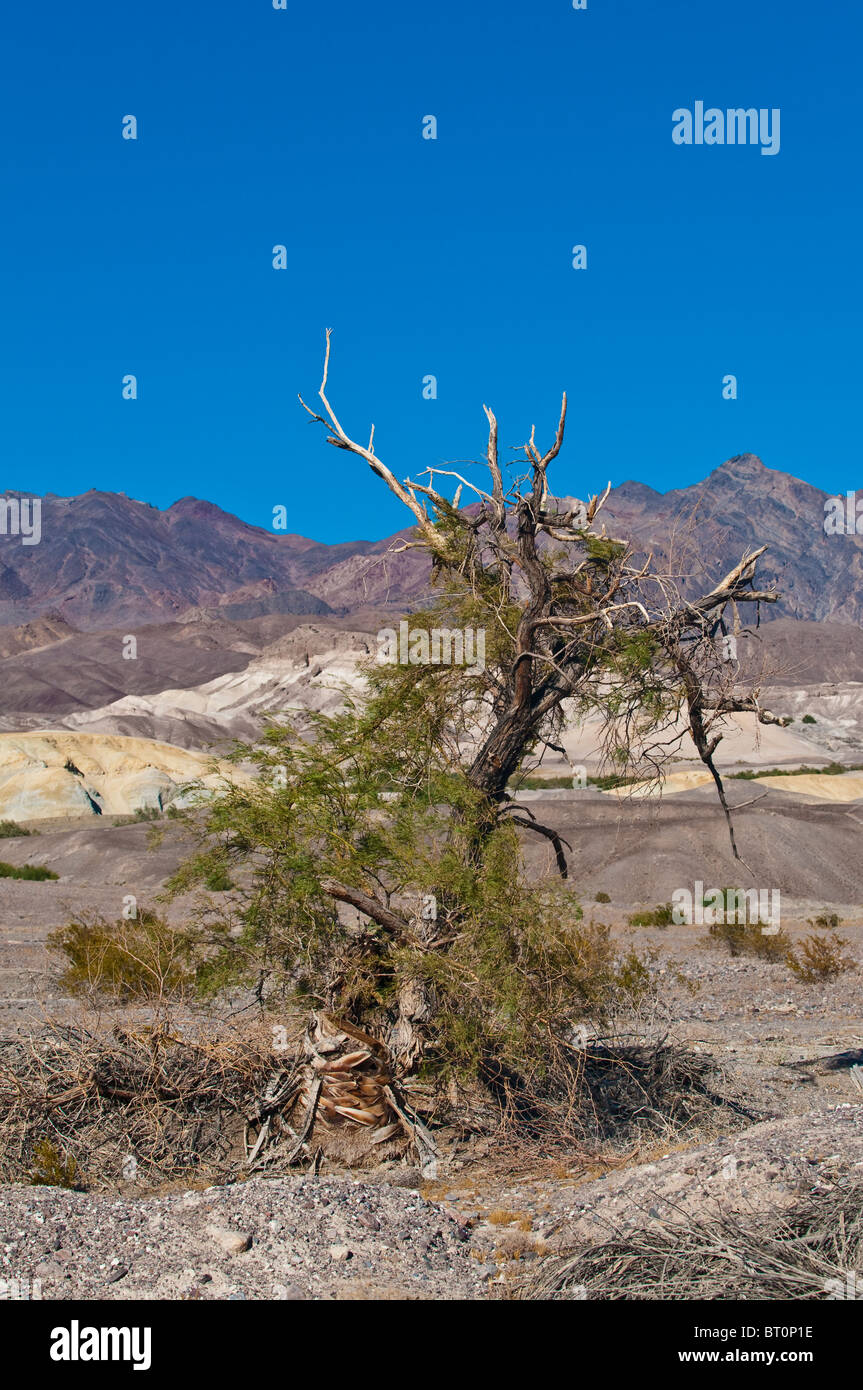 Dead, dried up tree in Death Valley National Park, California, USA Stock Photo