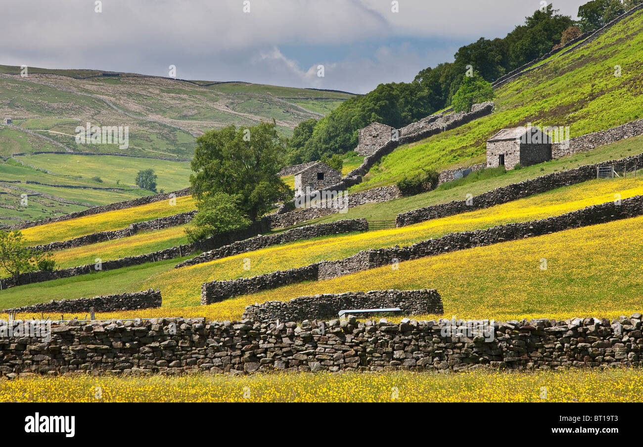 Wild flower meadow near Muker, Swaledale, Yorkshire Dales National Park - Stock Image