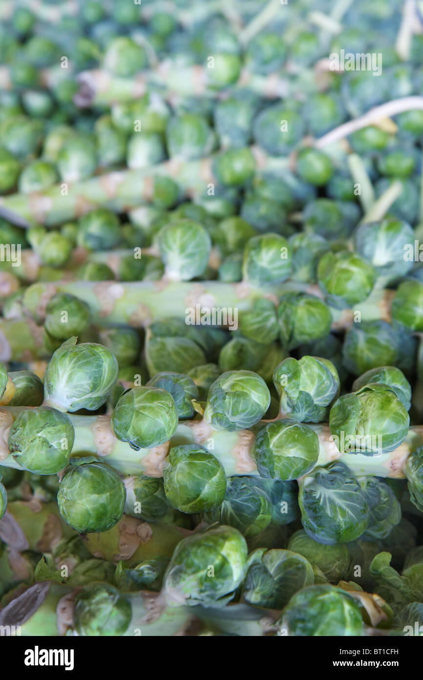 Pile of brussel sprout stalks at the farmers market - Stock Image