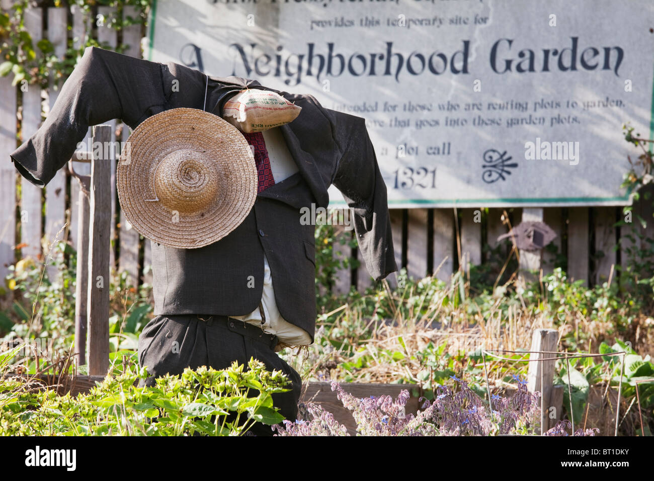 Scarecrow dressed in suit, white shirt and tie at community garden in Arcata, California, USA. - Stock Image