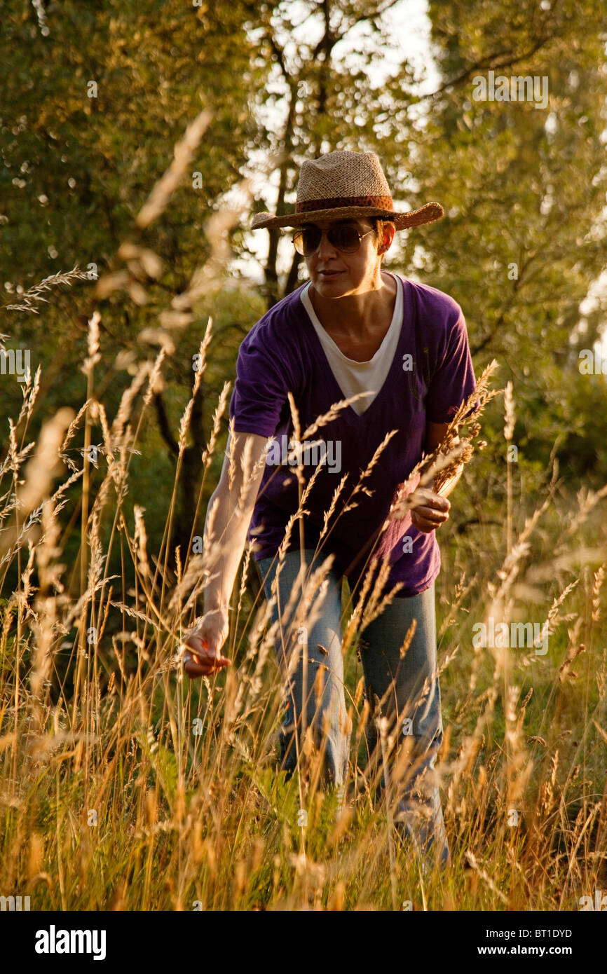 Mujer recogiendo flores secas en el campo Cantabria España Woman picking dry flowers in the field Cantabria - Stock Image
