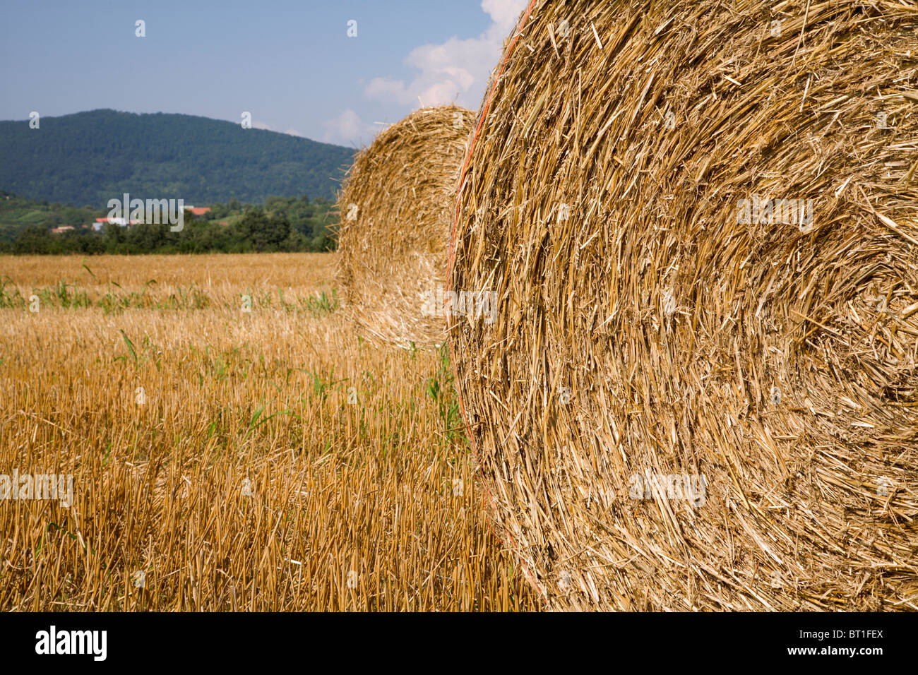 bale of the straw - Stock Image