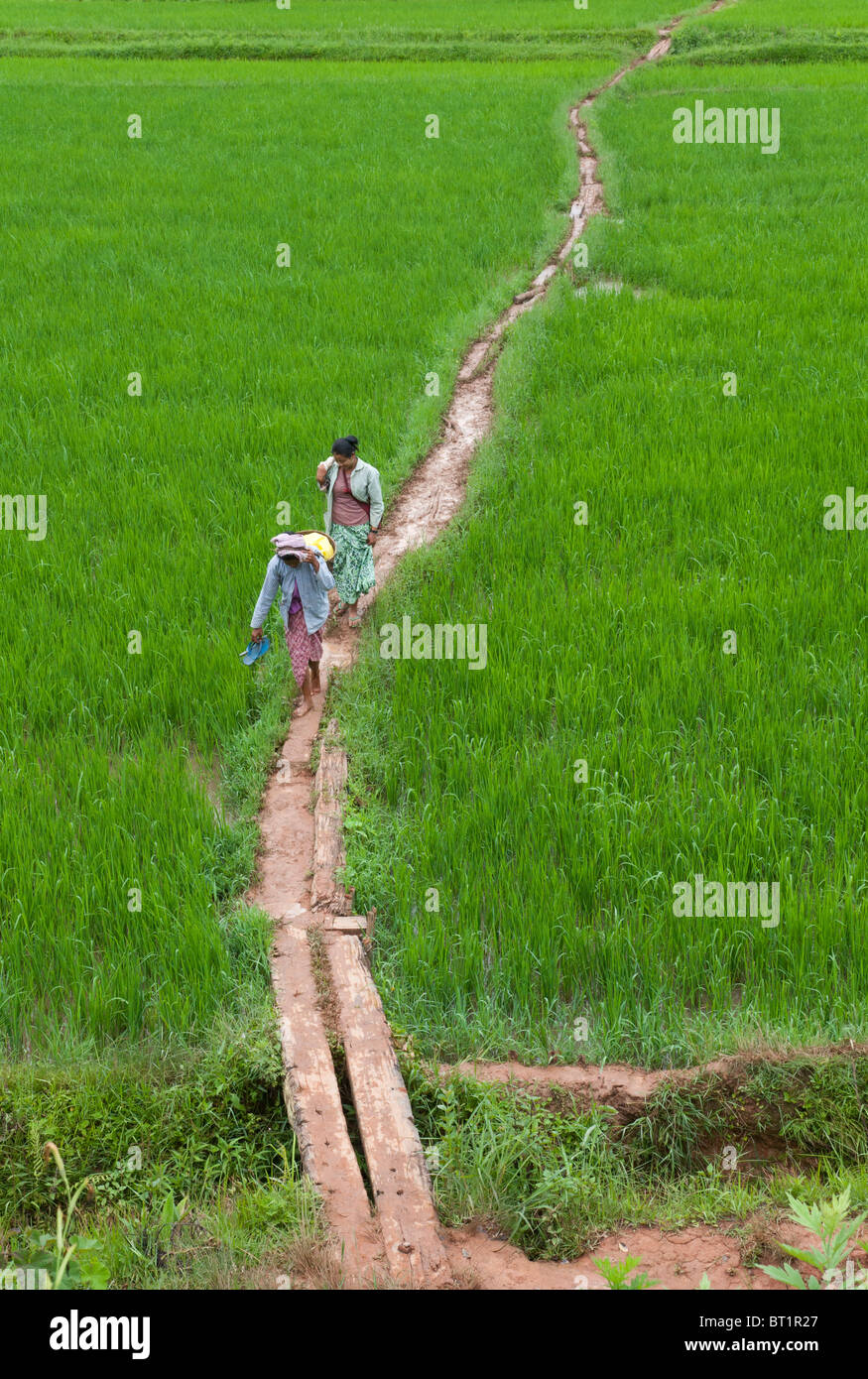 two women walking across lush rice paddies. Shan State. Myanmar - Stock Image