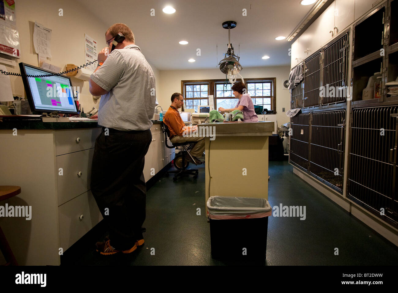 Veterinarian and veterinary technicians at a veterinary practice - Stock Image