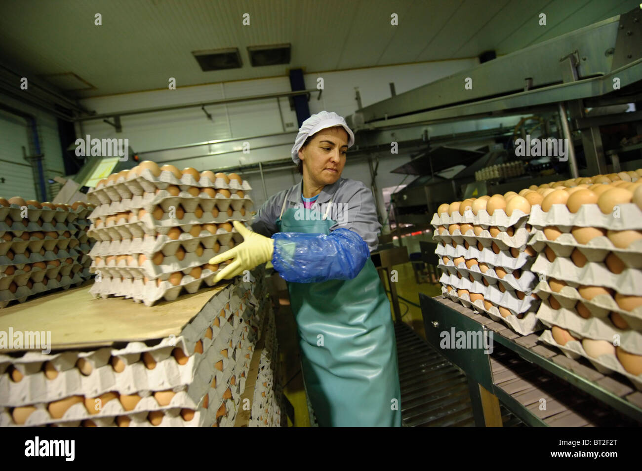 Female factory worker moves egg cartons - Stock Image