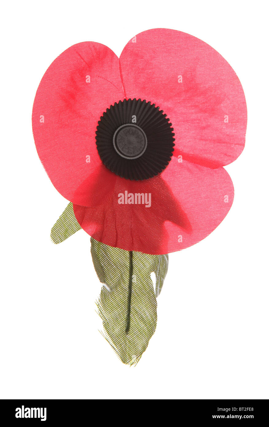 remembrance poppy isolated studio cutout - Stock Image
