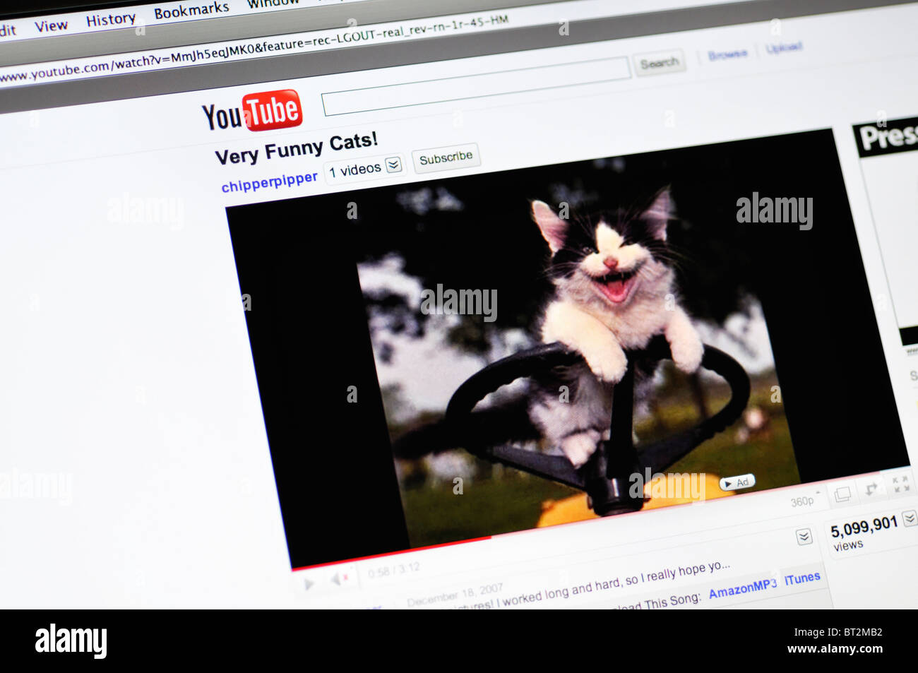 you tube funny cat videos