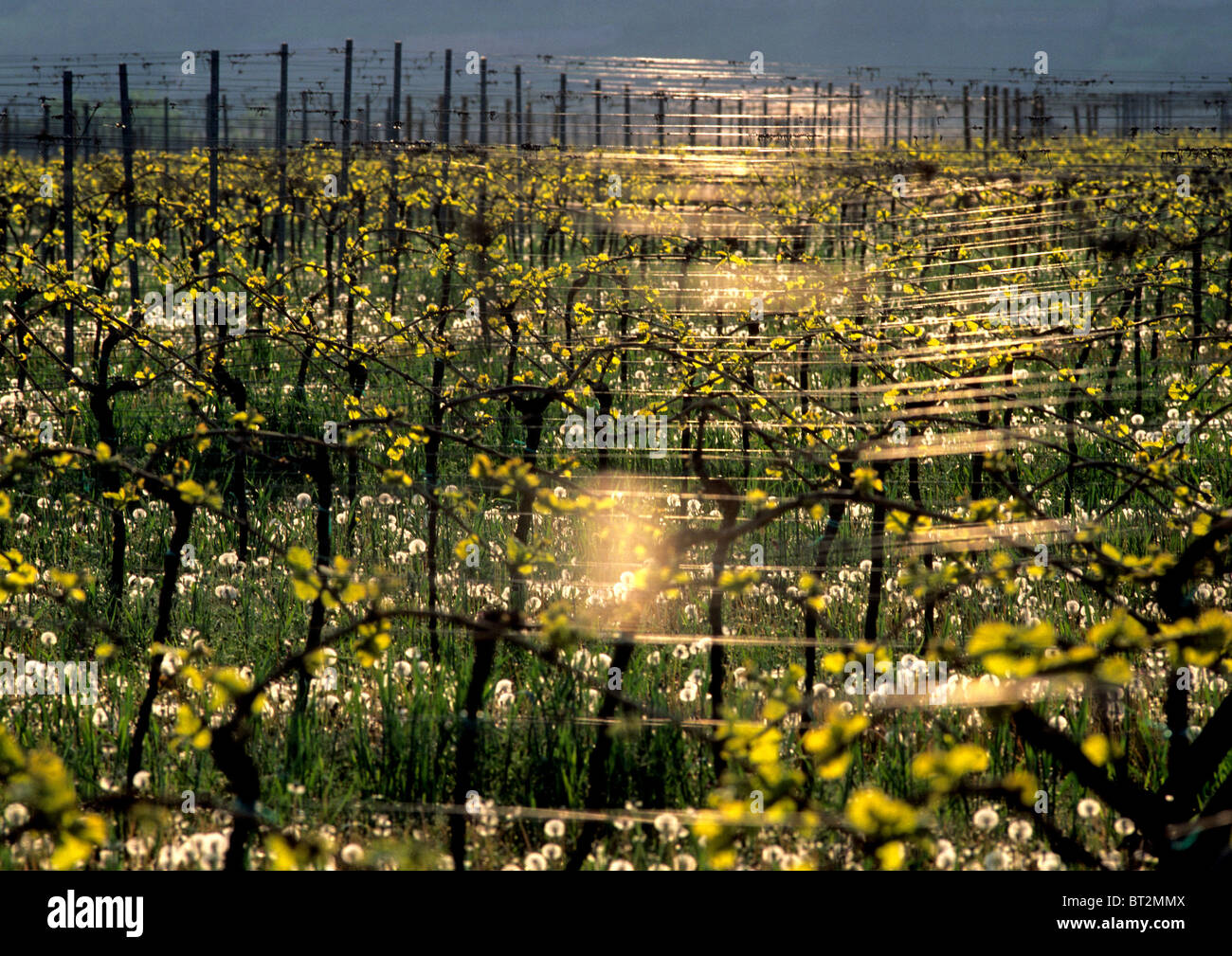 Field With Small Trees And Yellow Flowers Stock Photo 32022282 Alamy