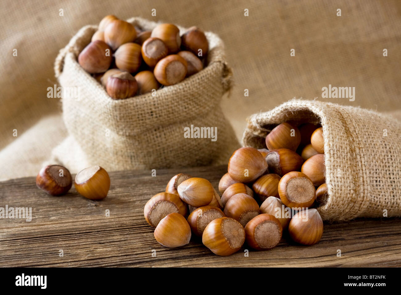 Ripe hazelnuts in a bags - Stock Image