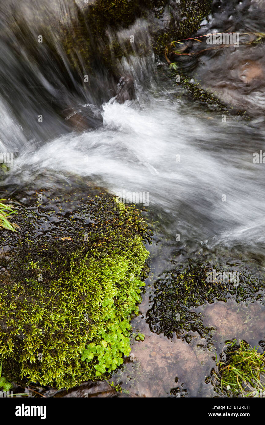 Mossy stream in the Black Mountains Brecon Beacons National Park Wales UK - Stock Image