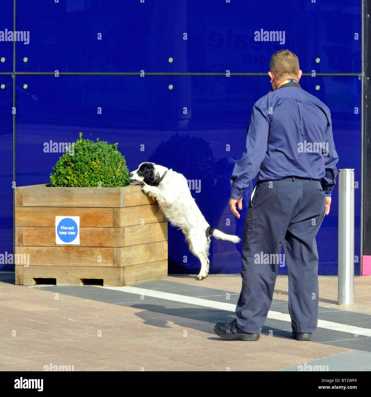 Sniffer dog checking major events venue in London - Stock Image