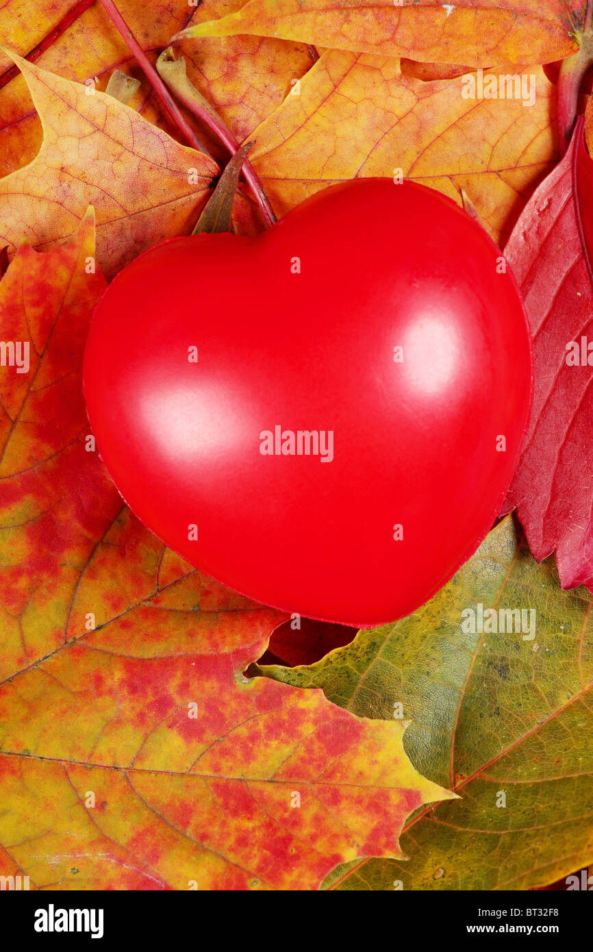 Heart laying on autumn leafs - helth care concept - Stock Image
