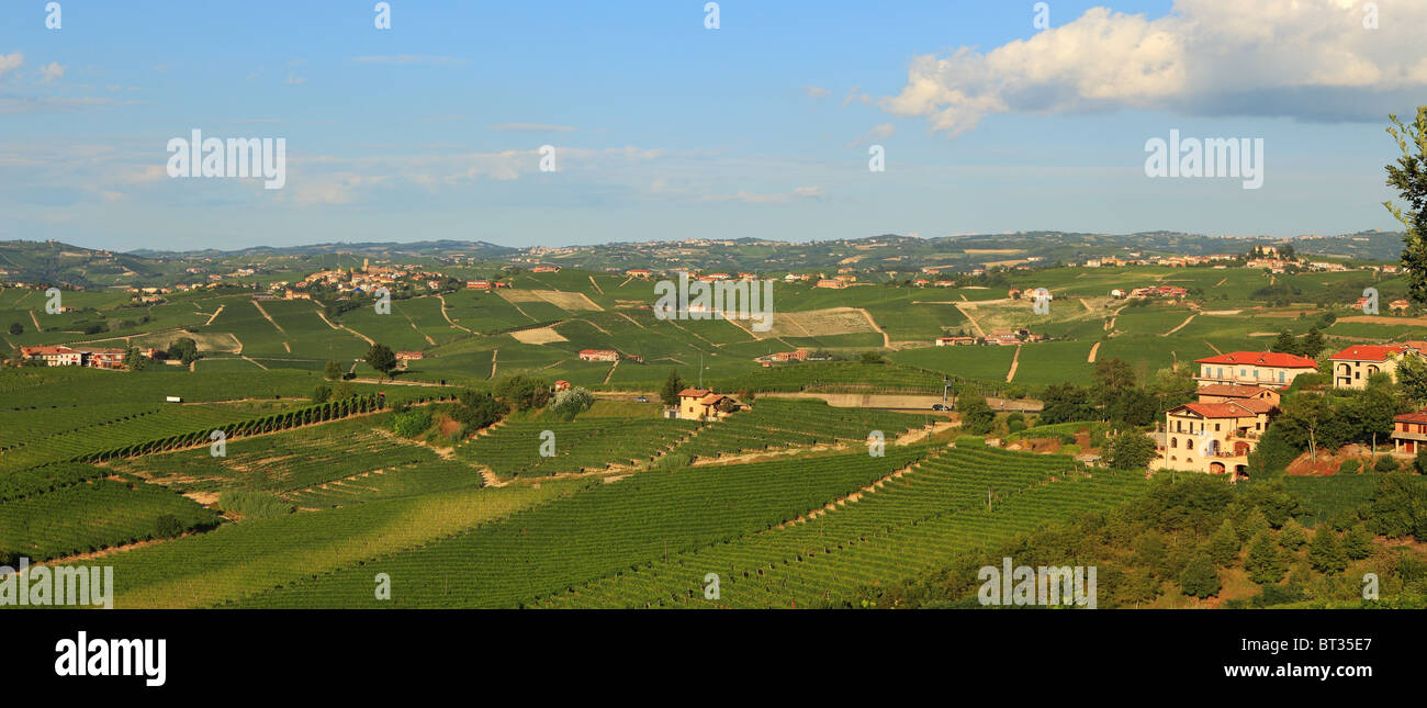 Panoramic view on vineyards in northern Italy. - Stock Image