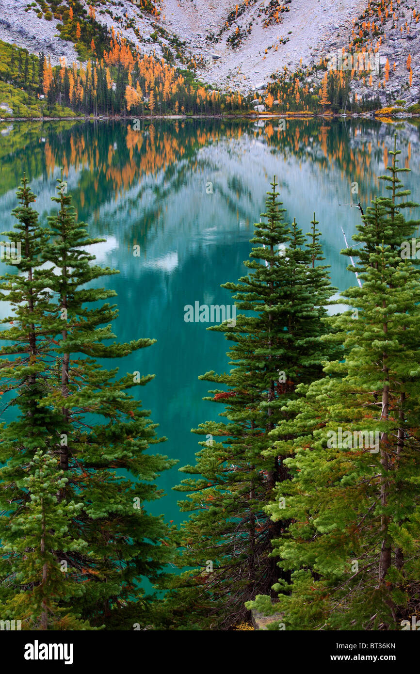 Larch trees and firs at Colchuck Lake in the Alpine Lakes wilderness of Washington state - Stock Image